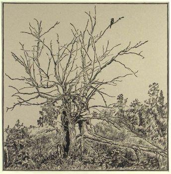 Тарас Бочаров, Екатерина Комракова. Сухое дерево.